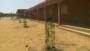 Arbres plantés aux écoles du burkina-Faso